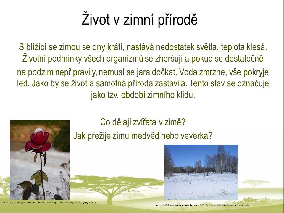 Život v zimní přírodě S blížící se zimou se dny krátí, nastává nedostatek světla, teplota klesá. Životní podmínky všech organizmů se zhoršují a pokud