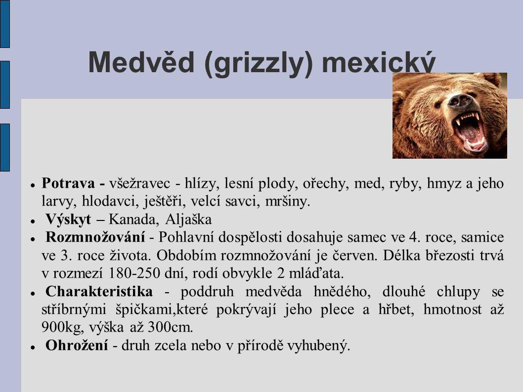 Medvěd (grizzly) mexický  Potrava - všežravec - hlízy, lesní plody, ořechy, med, ryby, hmyz a jeho larvy, hlodavci, ještěři, velcí savci, mršiny.