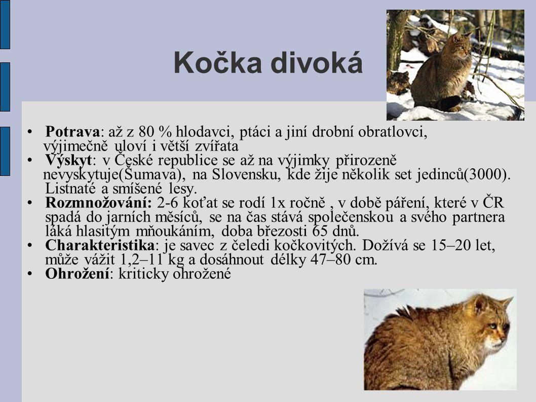 Kočka divoká •Potrava: až z 80 % hlodavci, ptáci a jiní drobní obratlovci, výjimečně uloví i větší zvířata •Výskyt: v České republice se až na výjimky přirozeně nevyskytuje(Šumava), na Slovensku, kde žije několik set jedinců(3000).