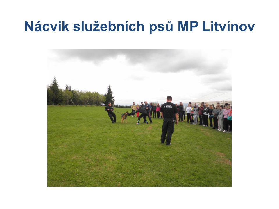 Nácvik služebních psů MP Litvínov
