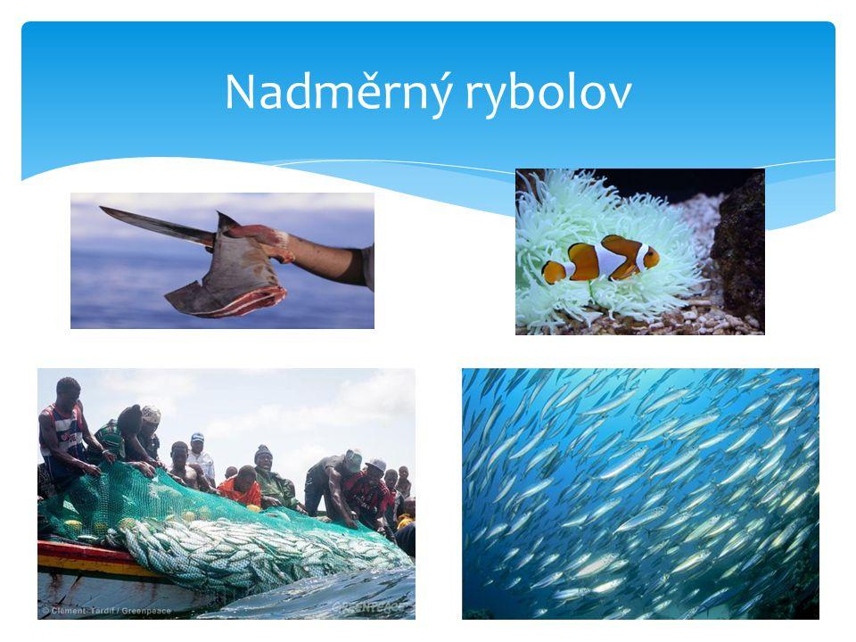 Nadměrný rybolov