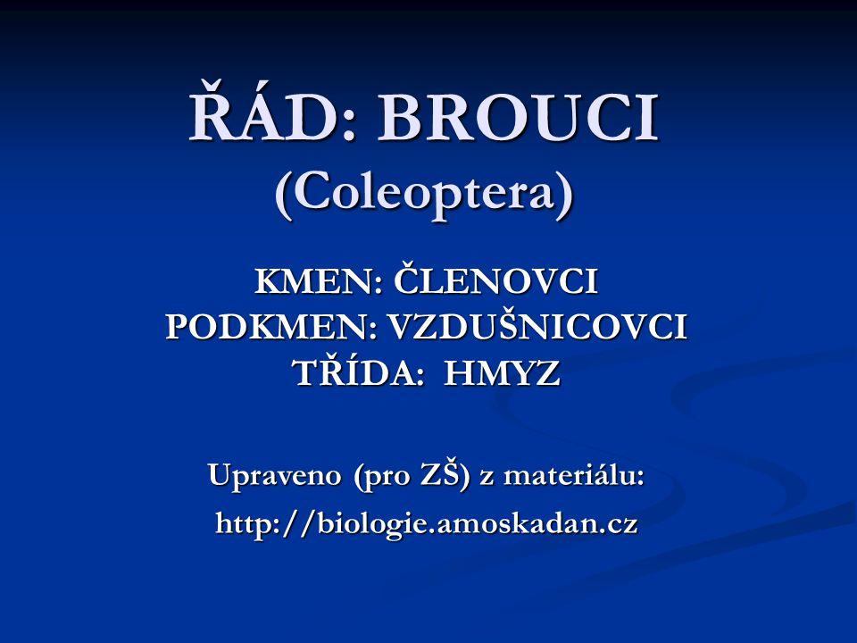 ŘÁD: BROUCI (Coleoptera) KMEN: ČLENOVCI PODKMEN: VZDUŠNICOVCI TŘÍDA: HMYZ Upraveno (pro ZŠ) z materiálu: http://biologie.amoskadan.cz