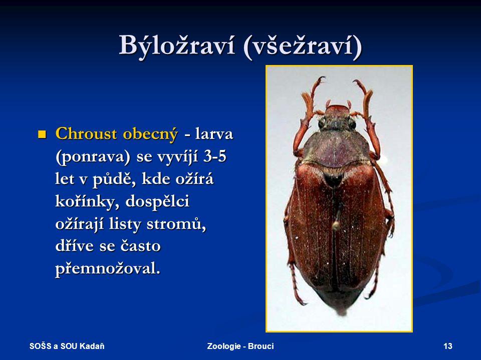 SOŠS a SOU Kadaň 12Zoologie - Brouci Brouci živící se trusem  Chrobák lesní - larvy se živí trusem, kuklí se v zemi, dospělci často žijí na hnijících