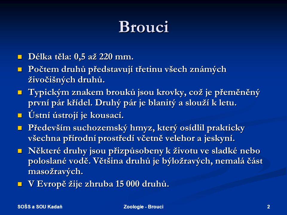 SOŠS a SOU Kadaň 2Zoologie - Brouci Brouci  Délka těla: 0,5 až 220 mm.