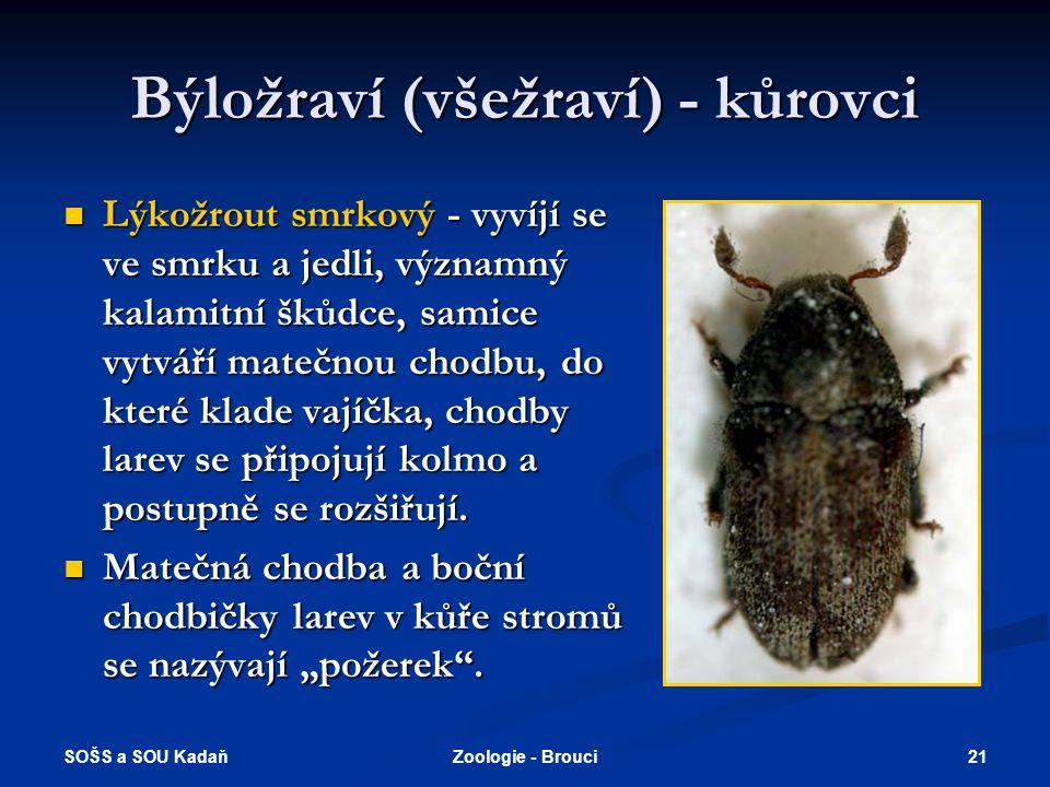 SOŠS a SOU Kadaň 20Zoologie - Brouci Býložraví (všežraví) - mandelinky  Jedna z nejpočetnějších čeledí na světě, několik desítek tisíc druhů, všechny