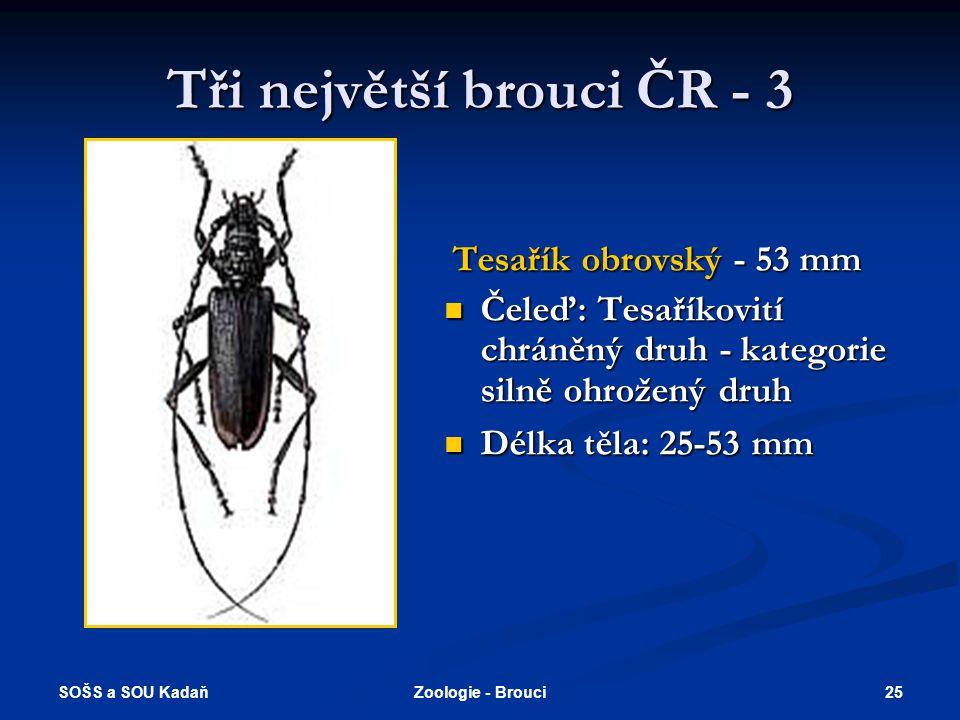 SOŠS a SOU Kadaň 24Zoologie - Brouci Tři největší brouci ČR - 2 Tesařík zavalitý - 60 mm  Čeleď: Tesaříkovití chráněný druh - kategorie silně ohrožen