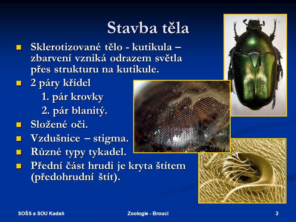 SOŠS a SOU Kadaň 13Zoologie - Brouci Býložraví (všežraví)  Chroust obecný - larva (ponrava) se vyvíjí 3-5 let v půdě, kde ožírá kořínky, dospělci ožírají listy stromů, dříve se často přemnožoval.