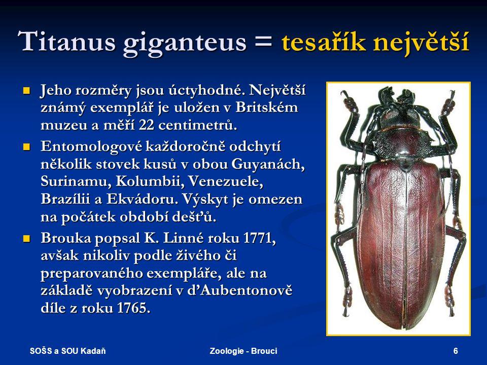 SOŠS a SOU Kadaň 6Zoologie - Brouci Titanus giganteus = tesařík největší  Jeho rozměry jsou úctyhodné.