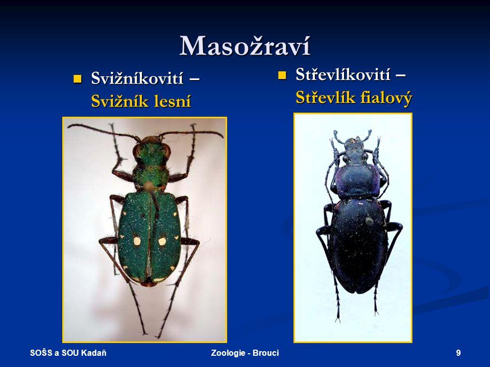 SOŠS a SOU Kadaň 29Zoologie - Brouci Použité zdroje  Daněk, G.: Zoologie.