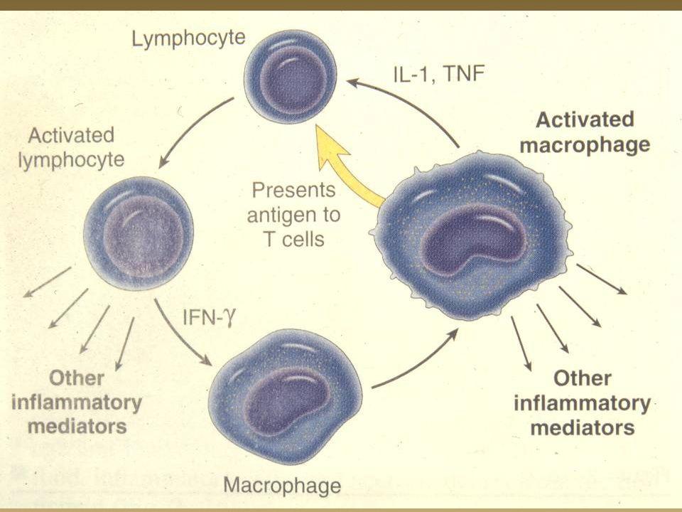 Tbc peritonea