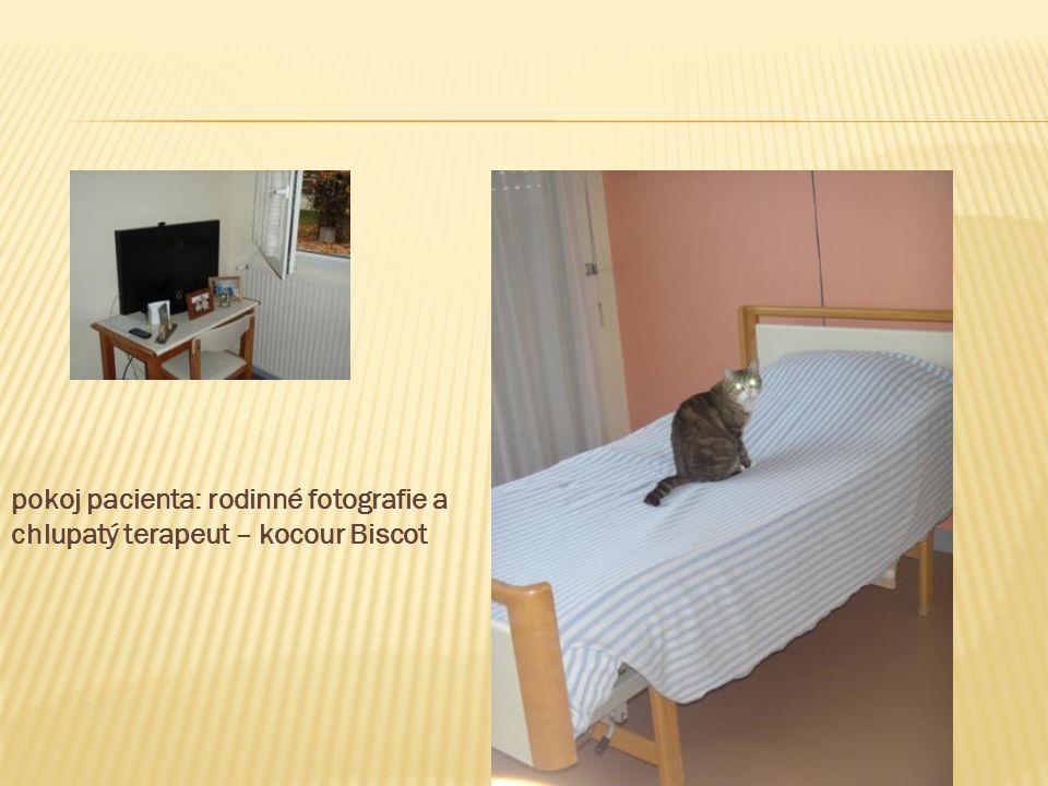 pokoj pacienta: rodinné fotografie a chlupatý terapeut – kocour Biscot