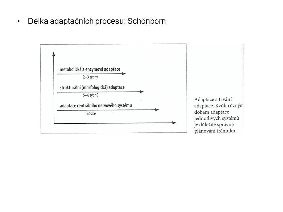 •Délka adaptačních procesů: Schönborn