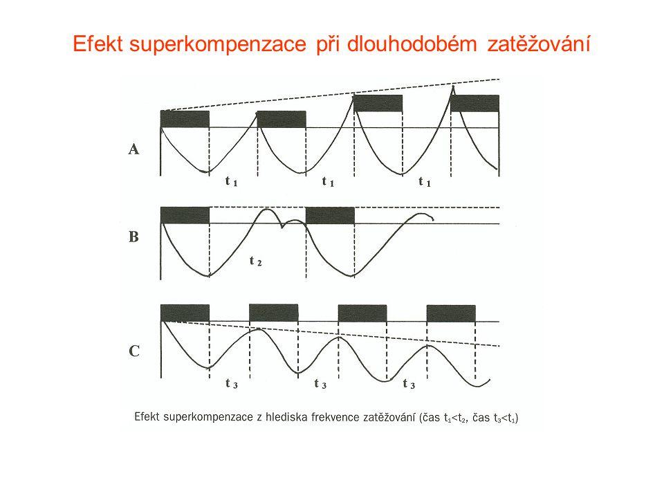 Efekt superkompenzace při dlouhodobém zatěžování