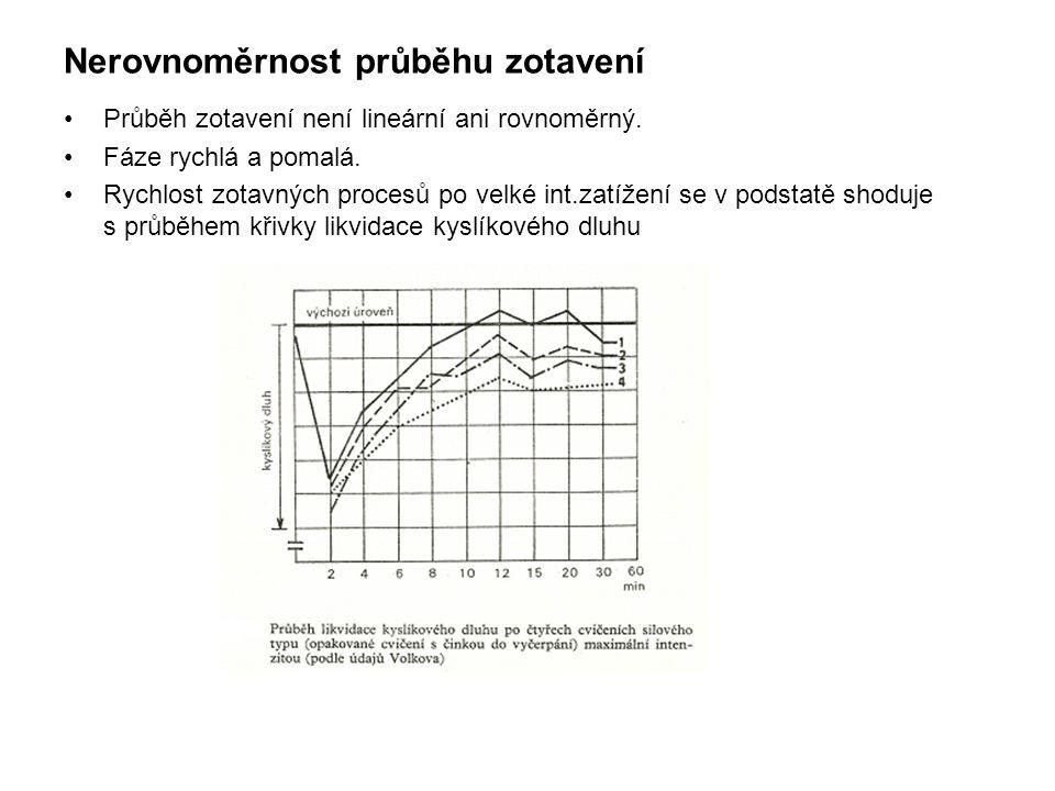 Nerovnoměrnost průběhu zotavení •Průběh zotavení není lineární ani rovnoměrný. •Fáze rychlá a pomalá. •Rychlost zotavných procesů po velké int.zatížen