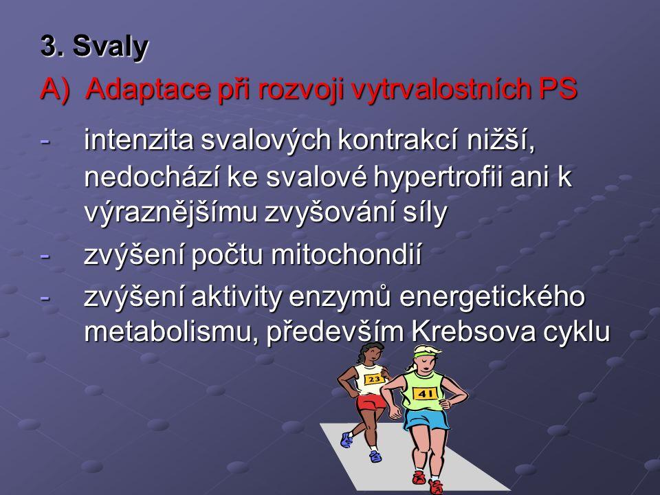 3. Svaly A) Adaptace při rozvoji vytrvalostních PS -intenzita svalových kontrakcí nižší, nedochází ke svalové hypertrofii ani k výraznějšímu zvyšování