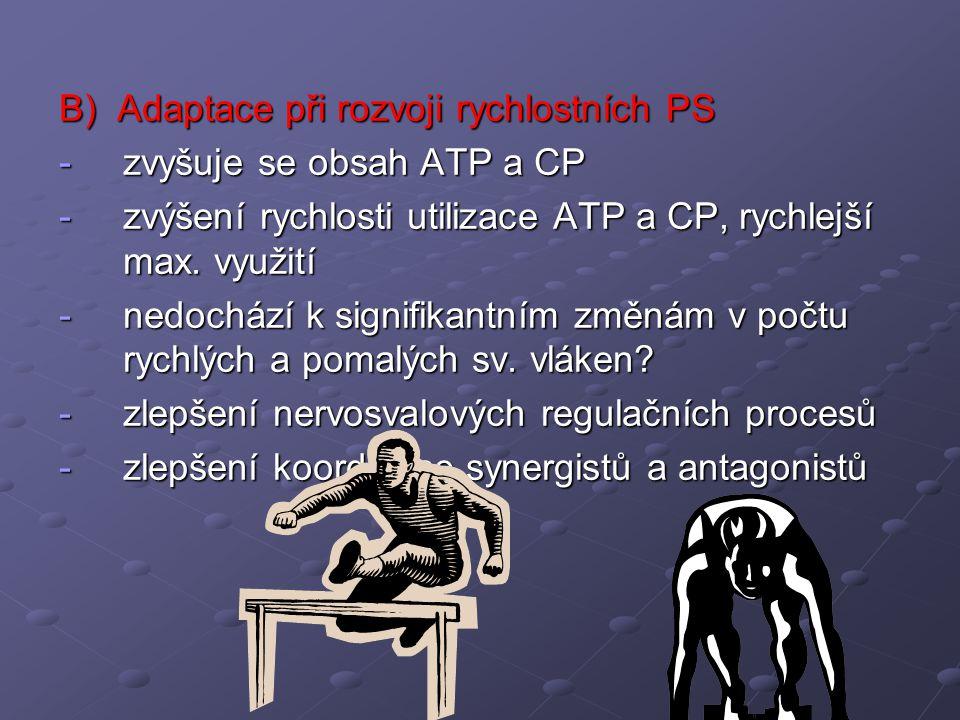 B) Adaptace při rozvoji rychlostních PS -zvyšuje se obsah ATP a CP -zvýšení rychlosti utilizace ATP a CP, rychlejší max. využití -nedochází k signifik