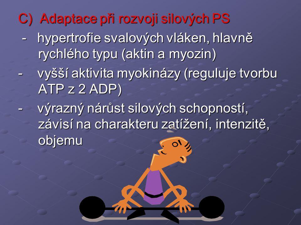 C) Adaptace při rozvoji silových PS - hypertrofie svalových vláken, hlavně rychlého typu (aktin a myozin) - hypertrofie svalových vláken, hlavně rychl