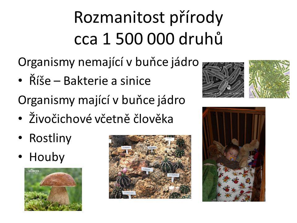 Rozmanitost přírody cca 1 500 000 druhů Organismy nemající v buňce jádro • Říše – Bakterie a sinice Organismy mající v buňce jádro • Živočichové včetně člověka • Rostliny • Houby