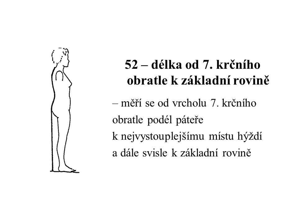 52 – délka od 7.krčního obratle k základní rovině – měří se od vrcholu 7.
