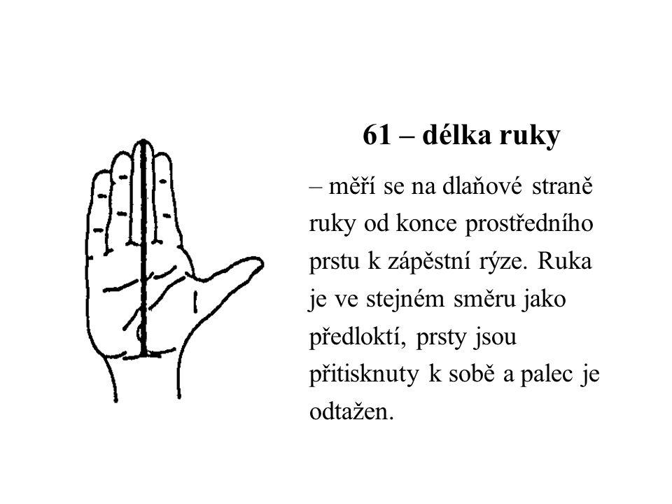 61 – délka ruky – měří se na dlaňové straně ruky od konce prostředního prstu k zápěstní rýze. Ruka je ve stejném směru jako předloktí, prsty jsou přit