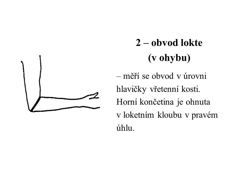 2 – obvod lokte (v ohybu) – měří se obvod v úrovni hlavičky vřetenní kosti. Horní končetina je ohnuta v loketním kloubu v pravém úhlu.