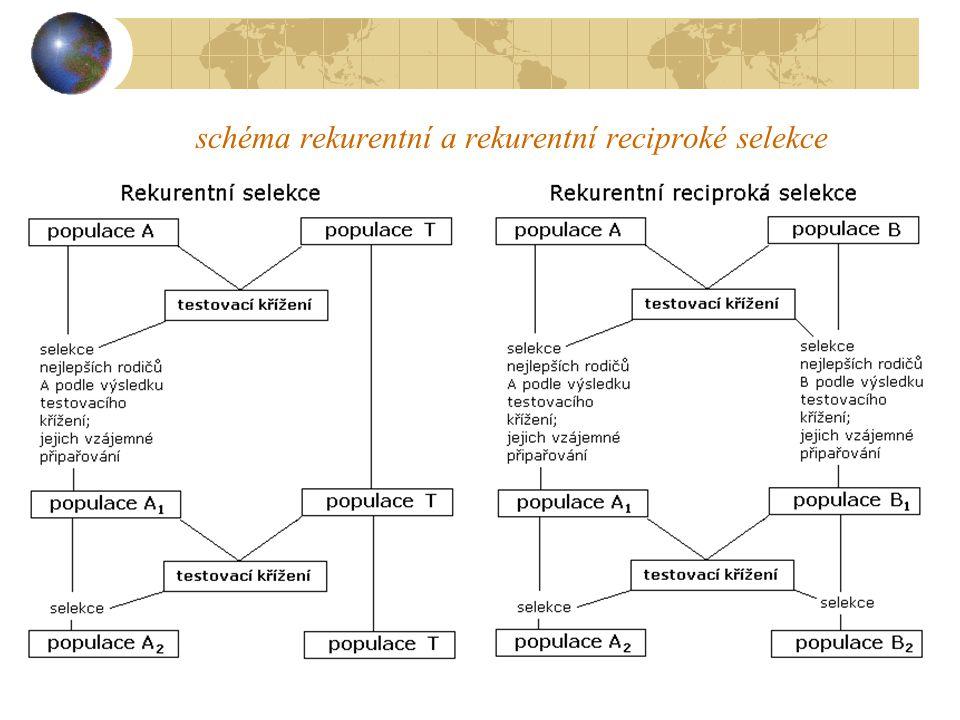 schéma rekurentní a rekurentní reciproké selekce