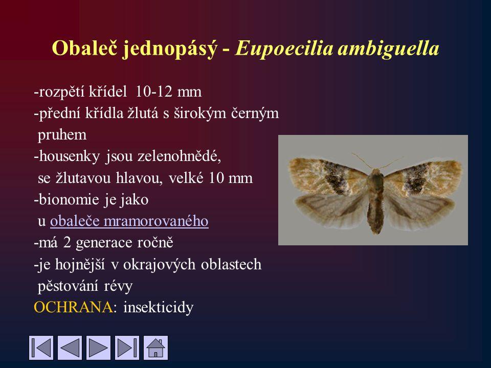Obaleč jednopásý - Eupoecilia ambiguella -rozpětí křídel 10-12 mm -přední křídla žlutá s širokým černým pruhem -housenky jsou zelenohnědé, se žlutavou