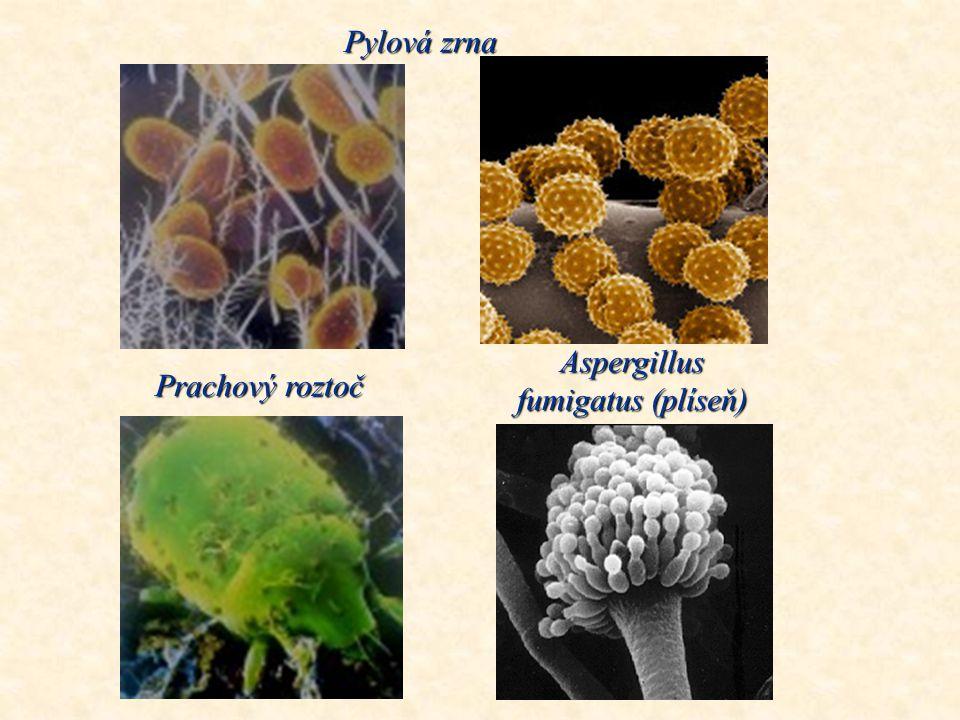 Prachové částečky pod mikroskopem Roztoč Kopřivka