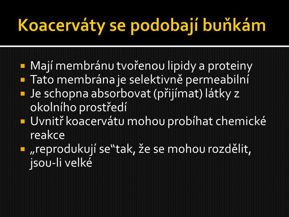  Mají membránu tvořenou lipidy a proteiny  Tato membrána je selektivně permeabilní  Je schopna absorbovat (přijímat) látky z okolního prostředí  U