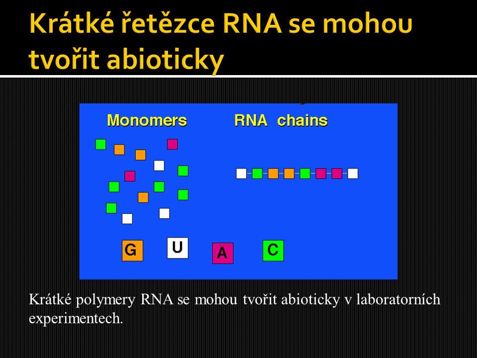 Krátké polymery RNA se mohou tvořit abioticky v laboratorních experimentech.