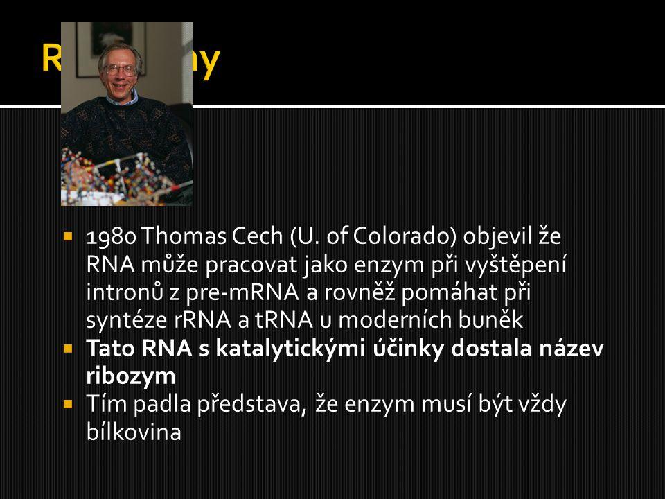 1980 Thomas Cech (U. of Colorado) objevil že RNA může pracovat jako enzym při vyštěpení intronů z pre-mRNA a rovněž pomáhat při syntéze rRNA a tRNA