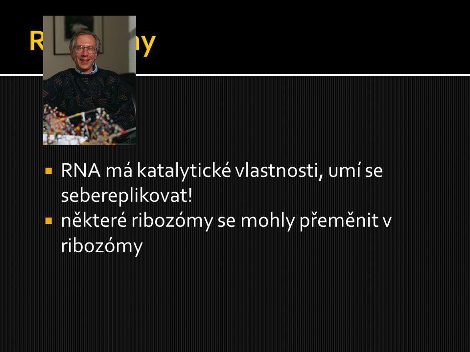  RNA má katalytické vlastnosti, umí se sebereplikovat!  některé ribozómy se mohly přeměnit v ribozómy