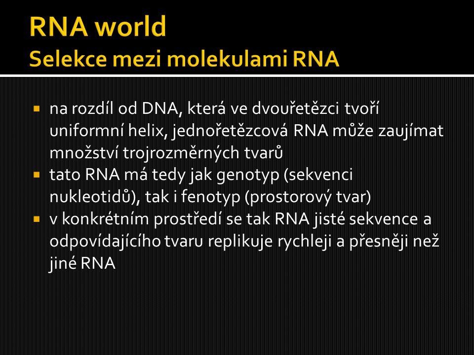  na rozdíl od DNA, která ve dvouřetězci tvoří uniformní helix, jednořetězcová RNA může zaujímat množství trojrozměrných tvarů  tato RNA má tedy jak
