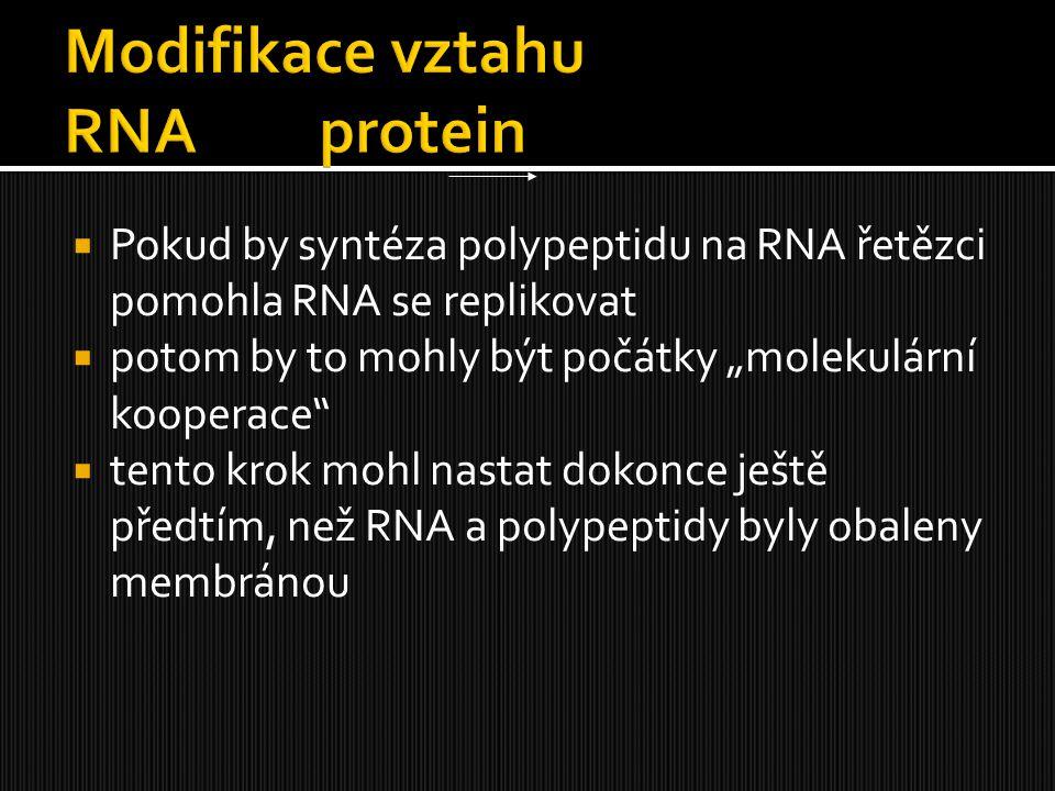 """ Pokud by syntéza polypeptidu na RNA řetězci pomohla RNA se replikovat  potom by to mohly být počátky """"molekulární kooperace""""  tento krok mohl nast"""