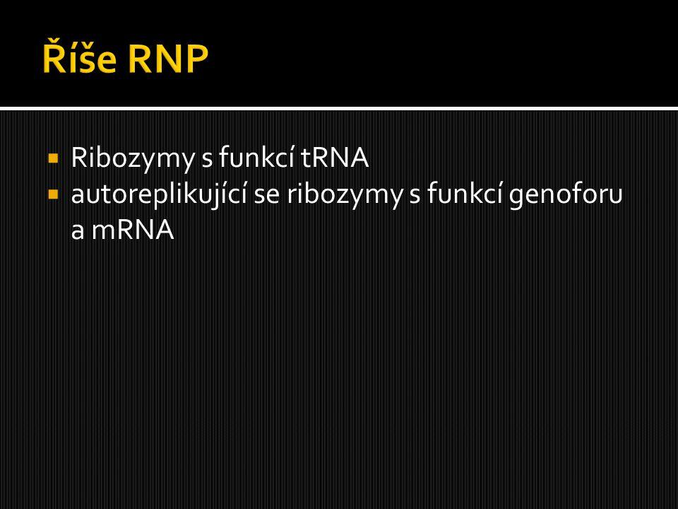  Ribozymy s funkcí tRNA  autoreplikující se ribozymy s funkcí genoforu a mRNA