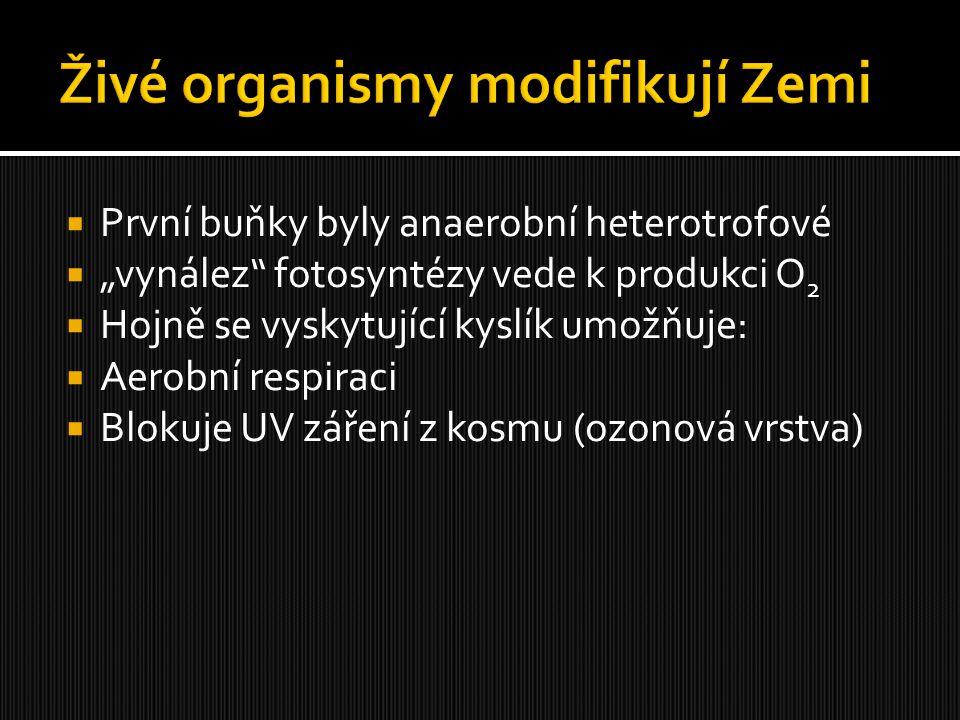 """ První buňky byly anaerobní heterotrofové  """"vynález"""" fotosyntézy vede k produkci O 2  Hojně se vyskytující kyslík umožňuje:  Aerobní respiraci  B"""