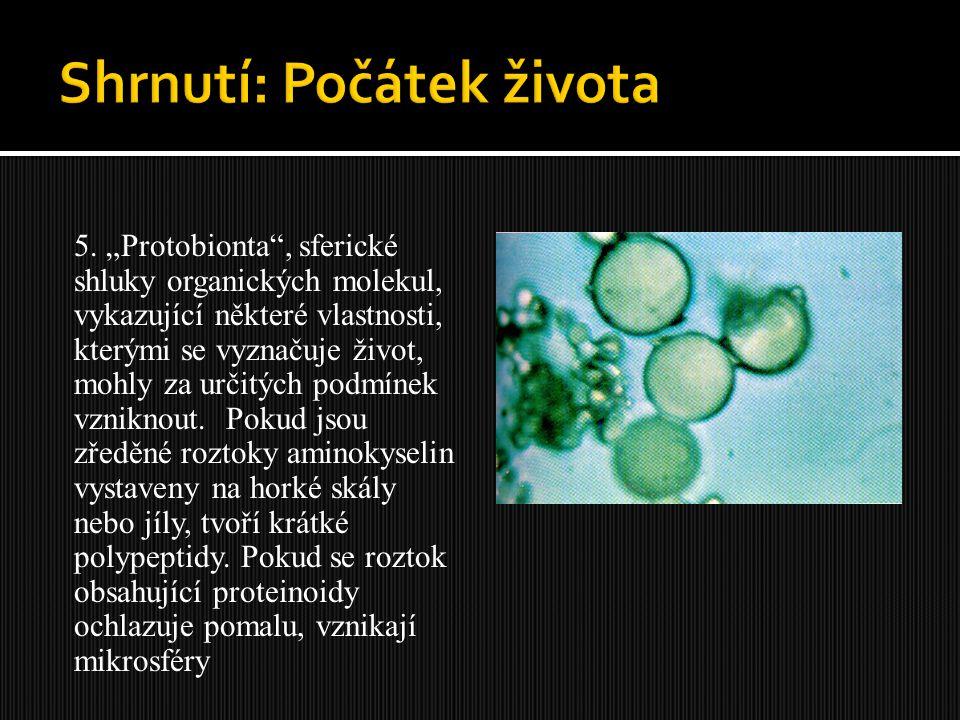 """5. """"Protobionta"""", sferické shluky organických molekul, vykazující některé vlastnosti, kterými se vyznačuje život, mohly za určitých podmínek vzniknout"""