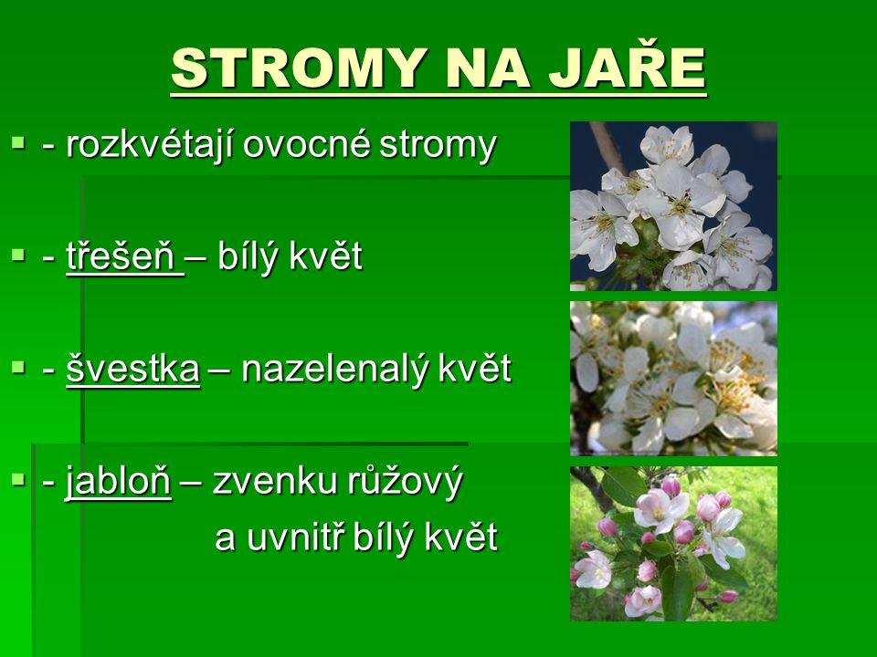 STROMY NA JAŘE  - rozkvétají ovocné stromy  - třešeň – bílý květ  - švestka – nazelenalý květ  - jabloň – zvenku růžový a uvnitř bílý květ a uvnit
