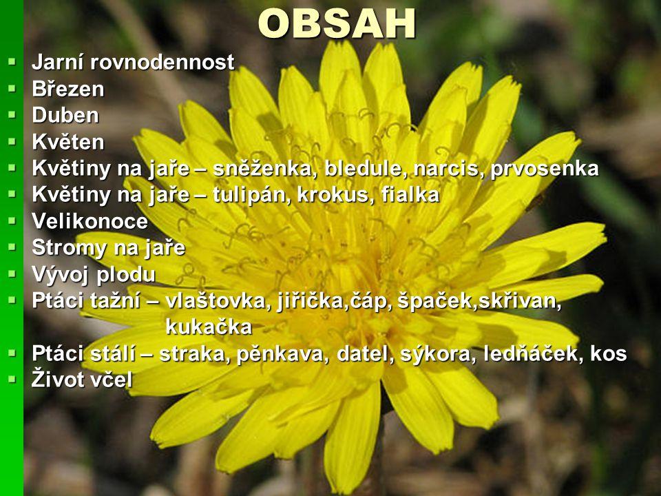 OBSAH  Jarní rovnodennost  Březen  Duben  Květen  Květiny na jaře – sněženka, bledule, narcis, prvosenka  Květiny na jaře – tulipán, krokus, fia