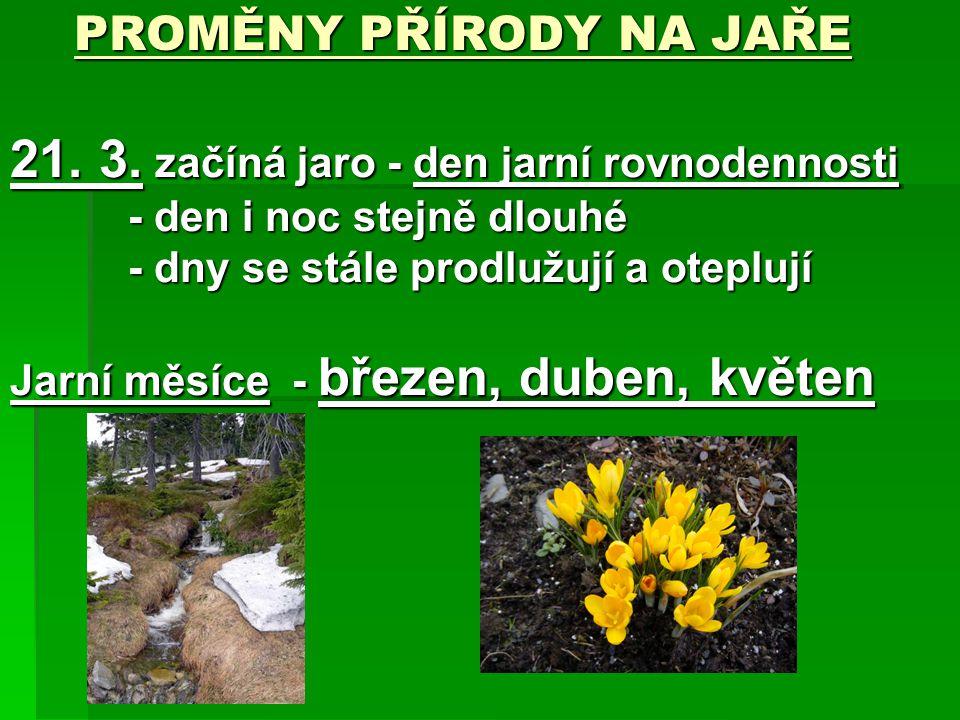 PROMĚNY PŘÍRODY NA JAŘE 21. 3. začíná jaro - den jarní rovnodennosti - den i noc stejně dlouhé - dny se stále prodlužují a oteplují Jarní měsíce - bře
