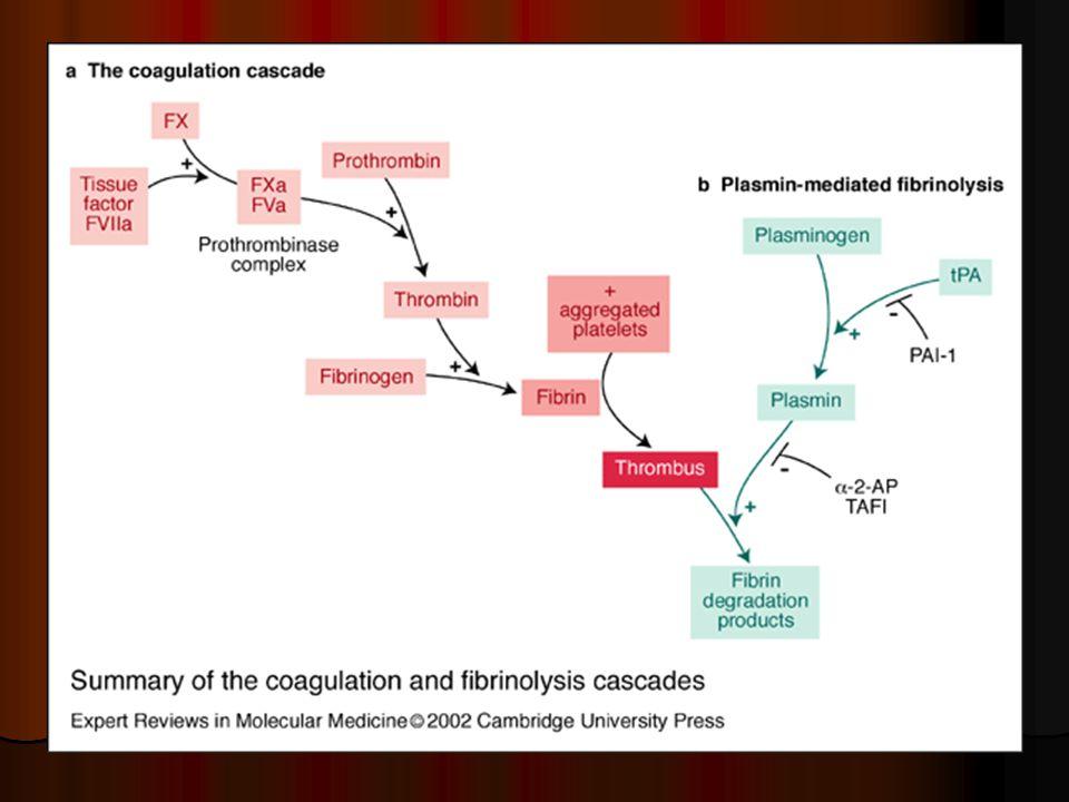 Mimotělní oběh a hemostatický systém  kontakt krve s umělým – neendoteliálním povrchem – aktivace vnitřního systému  porucha integrity cévní stěny – aktivace zevního systému  exprese TF na povrchu buněk endotelu  vysoká generace trombinu, aktivace krevních elementů  SIRS  rovnováha posunuta k prokoagulaci