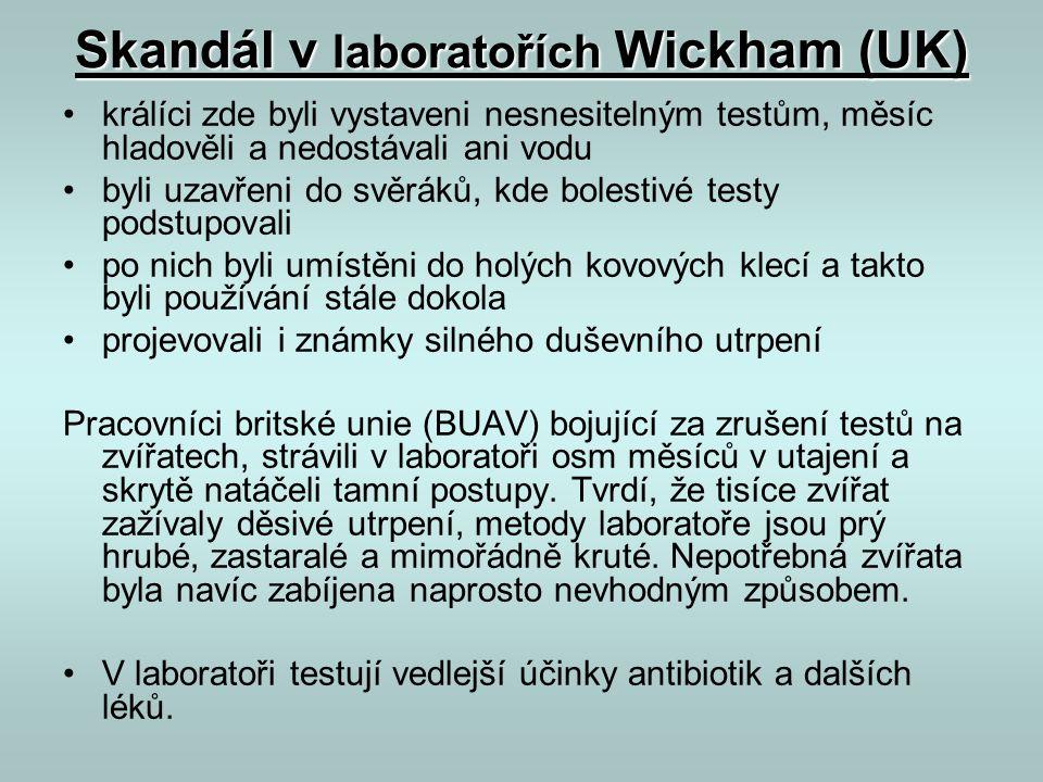 Skandál v laboratořích Wickham (UK) •králíci zde byli vystaveni nesnesitelným testům, měsíc hladověli a nedostávali ani vodu •byli uzavřeni do svěráků