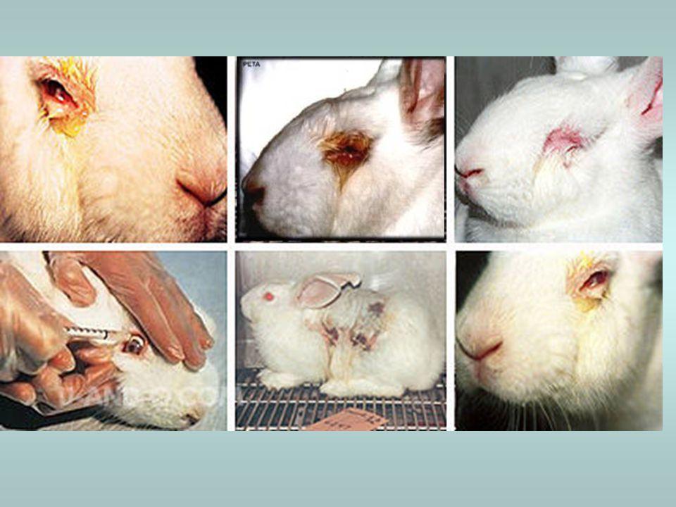 TYPY TESTŮ 2) Test kožní dráždivosti –používá se ke stanovení agresivity látky aplikované na kůži –pro test 1 látky se používají opět nejméně tři dospělí králíci/morčata –testovaná látka se aplikuje na oholenou a vrchní vrstvy pokožky zbavenou část zad –po hodinách, dnech či týdnech se objeví známky zčervenání, otoků, zánětů, práskání kůže a tvorba vředů –prostředky na tišení bolesti se zvířatům ve většině případů nepodávají!