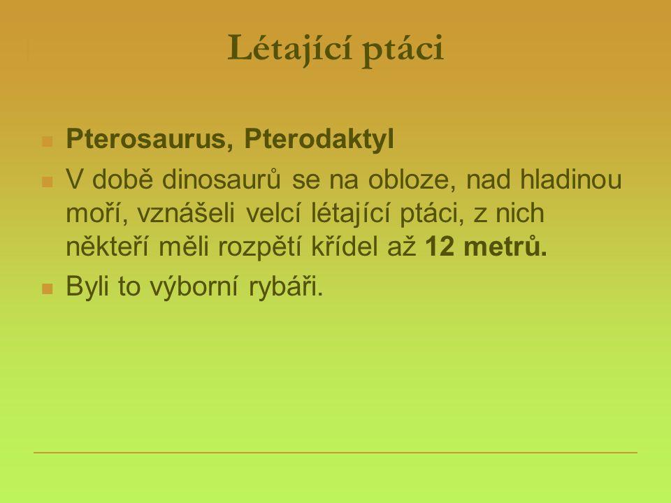 Létající ptáci  Pterosaurus, Pterodaktyl  V době dinosaurů se na obloze, nad hladinou moří, vznášeli velcí létající ptáci, z nich někteří měli rozpě