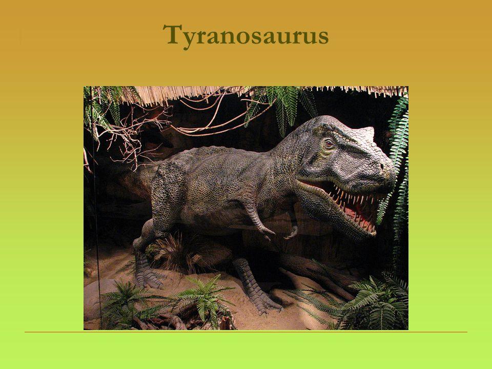 Zabijáci  Velociraptor  Napadal živočichy dlouhou zadní končetinou, zatím co na druhé stál a udržoval rovnováhu pomocí ocasu.