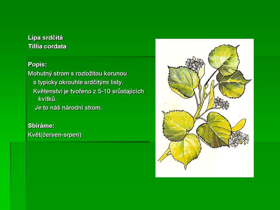 Test 1/Urči název rostliny 2/Která část rostliny se sbírá