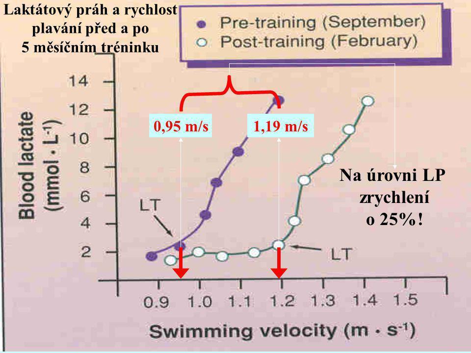 Laktátový práh a rychlost plavání před a po 5 měsíčním tréninku 0,95 m/s1,19 m/s Na úrovni LP zrychlení o 25%!