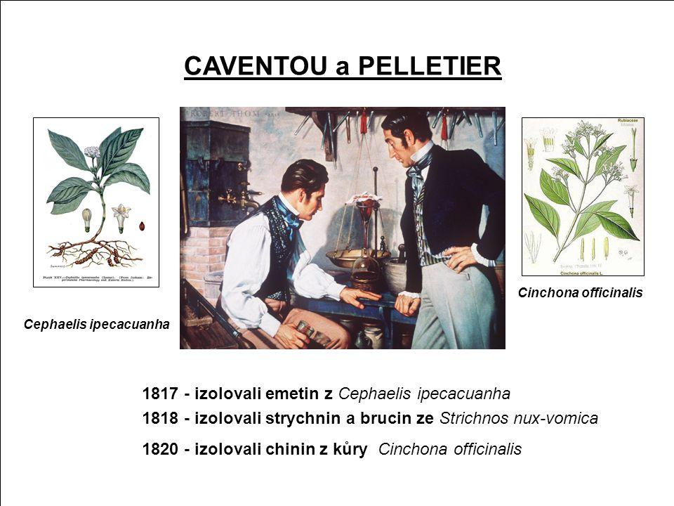 Kulčiba dávivá - Strychnos nux-vomica •bílé květy, plody - kulaté bobule s tuhým šedě žlutým oplodím •strom (keř) z tropické jižní Asie, indomalajského souostroví a severní Austrálie •v rosolovité dužnině 2- 4 podlouhlá semena •v semenech indolové alkaloidy (2-3%) •Pierre-Joseph Pelletier a Joseph-Bienaimé Caventou •alkaloidy - strychnin a brucin LÁTKA X Kulčibové alkaloidy Strychnin • obsah v semenech asi 1 % • LD 50 (oral, rat)PIM 16 mg/kg • LD 50 (oral, rat) HSDB 2,5 mg/kg • křečový jed (zadní kořeny míšní) • hořký • s konc.