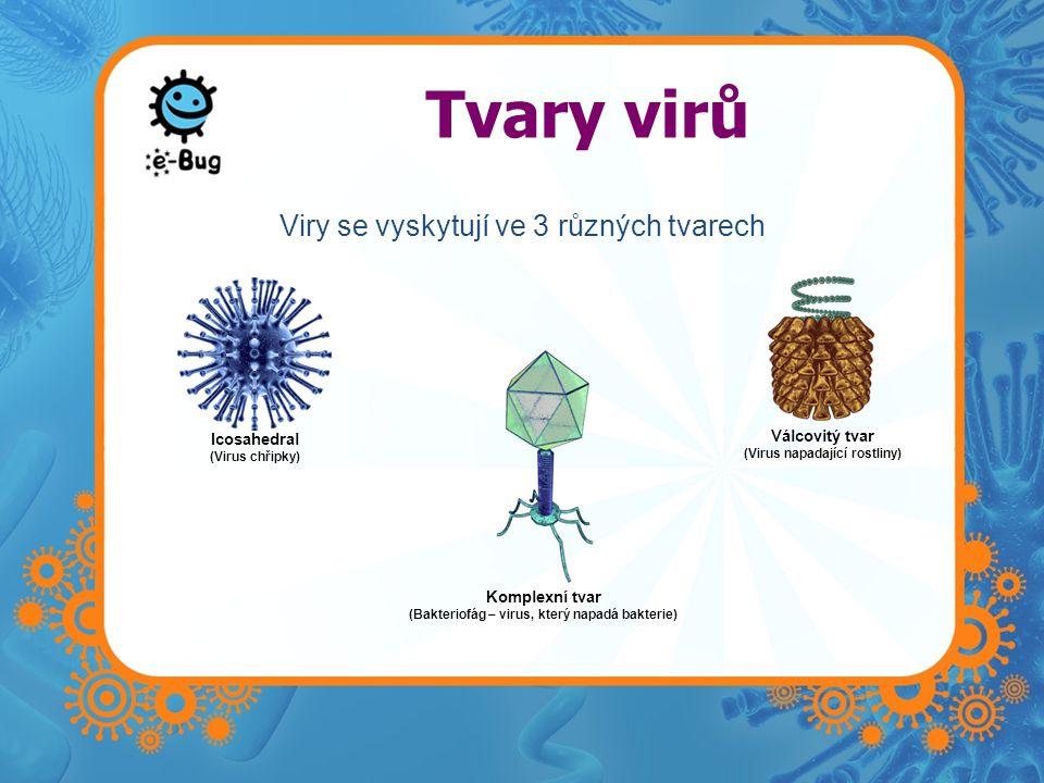 Tvary virů Icosahedral (Virus chřipky) Komplexní tvar (Bakteriofág – virus, který napadá bakterie) Válcovitý tvar (Virus napadající rostliny) Viry se