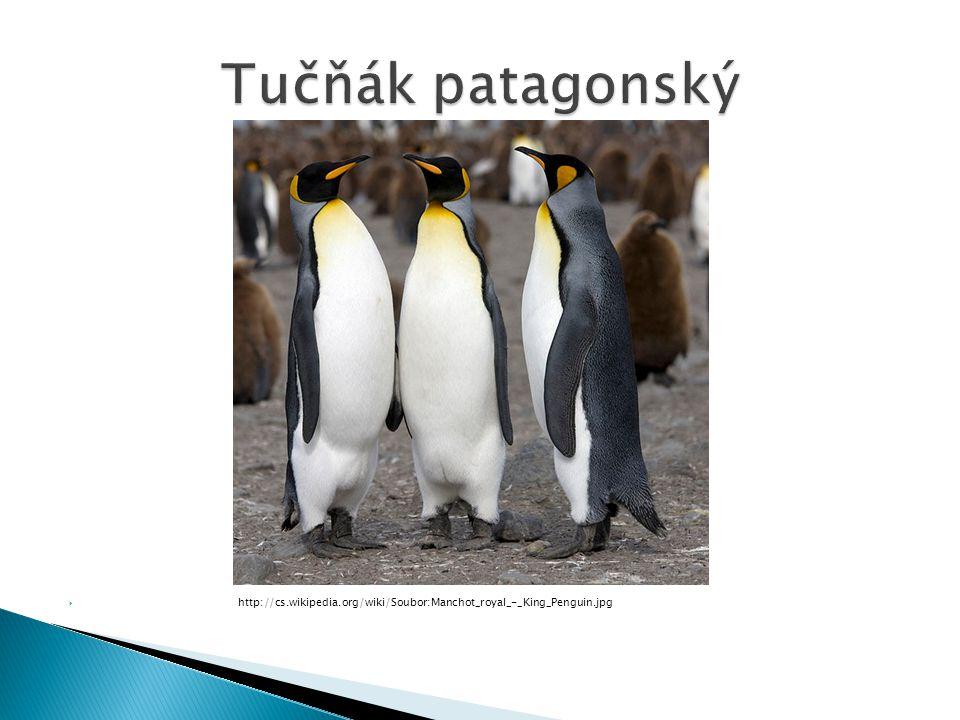  http://cs.wikipedia.org/wiki/Soubor:Manchot_royal_-_King_Penguin.jpg